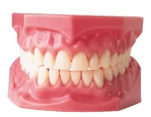 gigi(14)