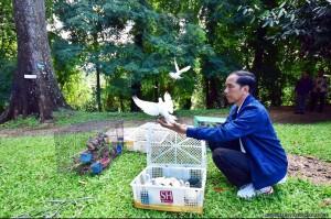 LEPASKAN BURUNG Presiden Jokowi sesudah istirahat sejenak usai mengikuti acara Car Free Day di Kota Bogor pada hari Minggu 3 Januari 2016, pada pukul 9 pagi langsung mengadakan acara pribadi berupa pelepasan satwa yakni 3 karung kodok yang totalnya berisi 150 ekor dan disebar di tiga buah kolam yang terletak di halaman depan Kompleks Istana Bogor. Sementara itu ada 11 buah kotak penuh aneka burung yang dibawa keluar dari kompleks Istana Bogor dan kemudian dilepaskan oleh Presiden Jokowi di tengah Kebun Raya Bogor. Saat melepaskan kodok di salah satu kolam, Presiden Jokowi secara kebetulan mendapati seekor biawak sedang terjebak dalam kotak saringan air. Presiden Jokowi pun segera memerintahkan perawat kolam untuk segera membebaskan biawak dan melemparkannya ke dalam kolam. FOTO :AGUS SUPARTO